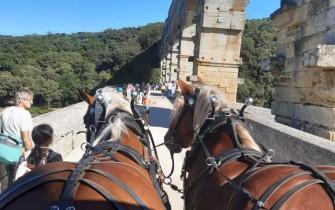 Visites guidées en attelage au Pont du Gard